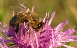 Meclovská zemědělská a.s. | Včela